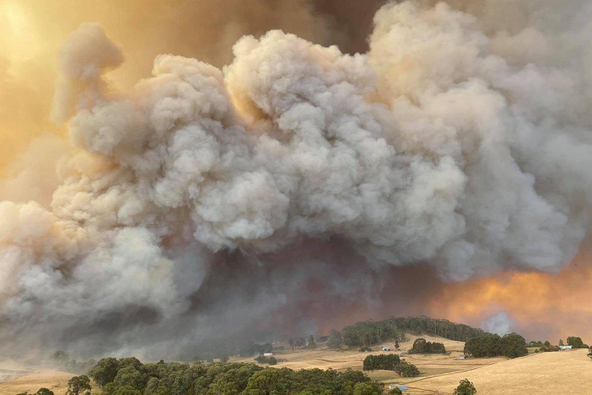 COX's Commitment to Bushfire Relief